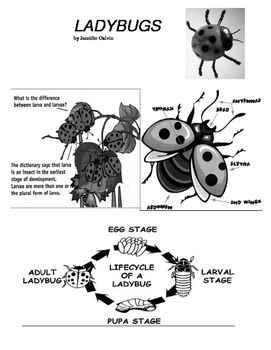 LADYBUGS INFORMATIONAL TEXT WITH CLOSE READING (FCAT FSA PARCC COMMON CORE)