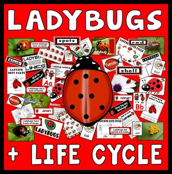LADYBUGS LIFE CYCLE TEACHING RESOURCES SCIENCE INSECTS MINIBEASTS NUMERACY