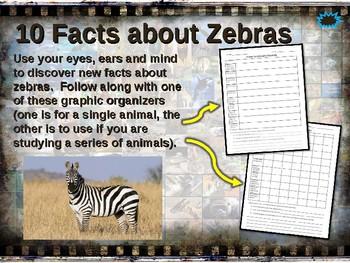 LARGE LAND MAMMALS BUNDLE 7 PPT ELEPHANT GIRAFFE BISON ZEBRA BUFFALO MOOSE CAMEL