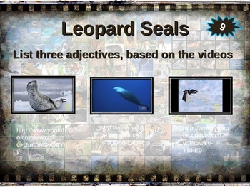 LEOPARD SEAL: 10 facts. Fun, engaging PPT (w links & free graphic organizer)