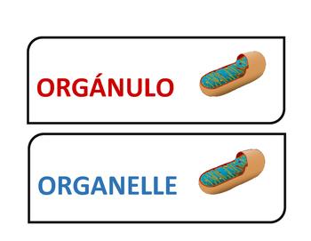 LEVELS OF ORGANIZATION DUAL WORD WALL