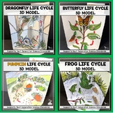 LIFE CYCLE BUNDLE - 3D Model - Distance Learning