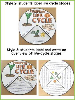 LIFE CYCLE CRAFT ACTIVITES: WHEELS: PLANTS