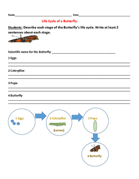 LIFE CYCLE OF A BUTTERFLY- SCIENCE ACTIVITY