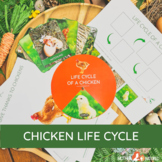 LIFE CYCLE OF A CHICKEN   Chicken printables   Chicken lif