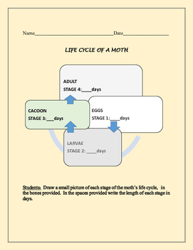 LIFE CYCLE OF A MOTH ACTIVITY