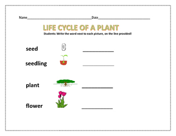 LIFE CYCLE OF A PLANT   K-2