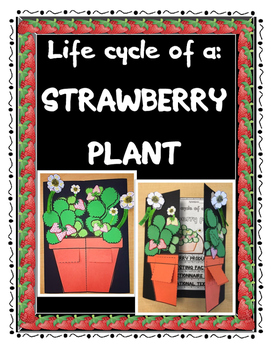 LIFE CYCLE OF A STRAWBERRY PLANT PORTFOLIO