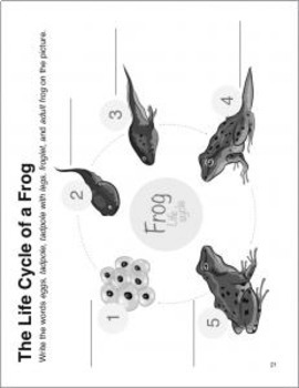 Life Cycle of a Frog Hands-on Activity—Writing and Art Project