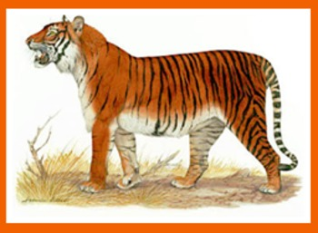 LIONS AND TIGERS AND BEARS PUBLIC DOMAIN CLIP ART (OVER 210 IMAGES)