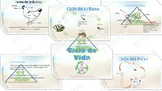 Power Point Presentation LIfe Cycle- Ciclo de vida (Spanish)