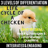 Life Cycle of a Chicken Differentiated Reading Passages