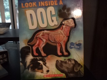 LOOK INSIDE A DOG