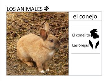 LOS ANIMALES presentation