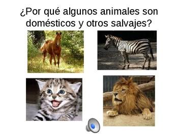 LOS ANIMALS