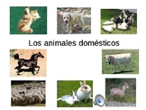 LOS ANIMALS