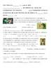 La Busqueda de Tesor: St. Patricks Day