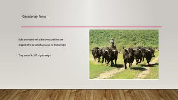 La Corrida del Toro ( Bull Fight)