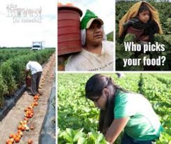 La Cosecha Documental | The Harvest Documentary | Spanish & English Questions