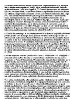 La Muñeca Menor - Story Questions