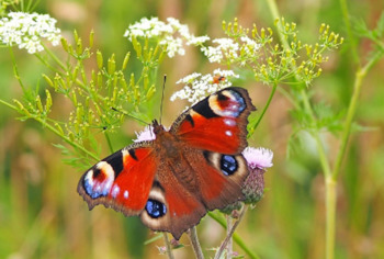La Naturaleza - Nature - Review Worksheet