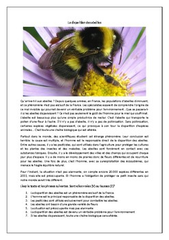 La disparition des abeilles / The disappearance of bees / Environment