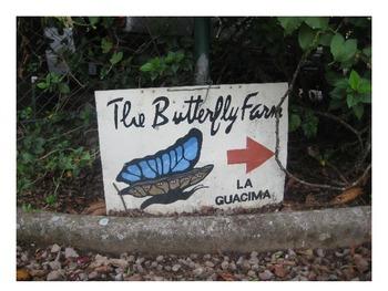 La granja de mariposas - Butterfly farm ppt