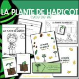 La plante de haricot - Pack complet
