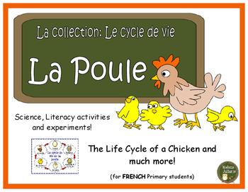 Le cycle de vie de la poule - French Chickens (life cycle,