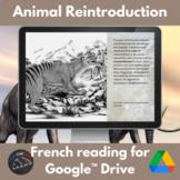 La réintroduction des animaux reading for French learners - Google Drive version