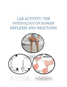 Lab Activity: The Physiology of Human Reflexes and Reactions