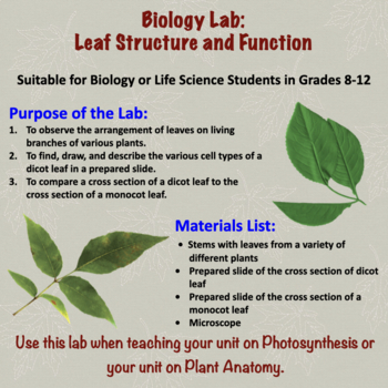 Leaf Structure and Function Lab by Amy Brown Science | TpT