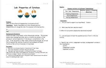 Lab- Properties of catalase