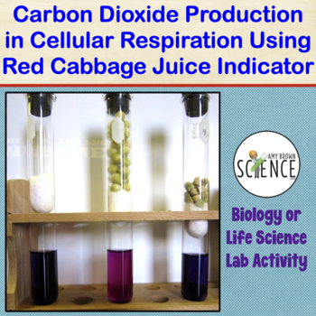 Cellular Respiration Using Cabbage Juice To Observe Co2 Production