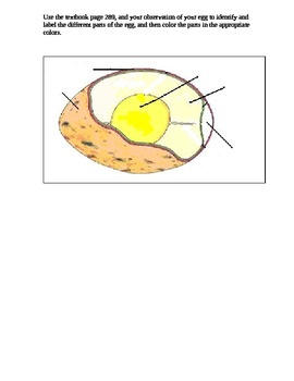Lab:  What's in a bird egg? (reproduction and development)