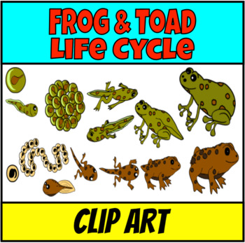 Frogs and toads life cycle Clip Art