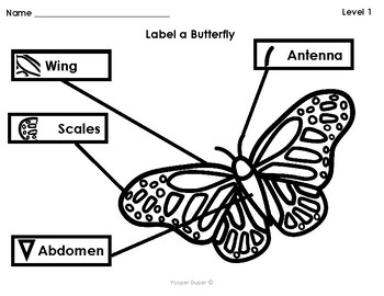 Label A Butterfly