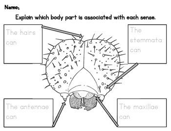 Label Caterpillar Senses