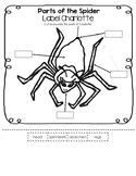 Label Charlotte - Parts of the Spider Worksheet (Simplified Version)
