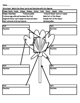 Label flower parts and name functions by carey bonifas tpt label flower parts and name functions ccuart Image collections