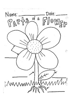 Labeling Parts Of A Flower Worksheets & Teaching Resources | TpT
