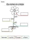 Label Parts of a Plant for Earth Day & Spring- 3 Differentiated Templates