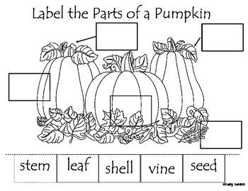 Label Parts of a Pumpkin