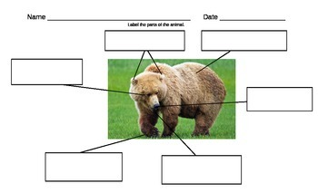 Label Parts of an Animal-Bear