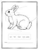 Label The Parts of A Rabbit