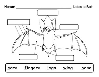 label bat diagram label a bat by livin' in a van down by the river | tpt bat diagram label #1