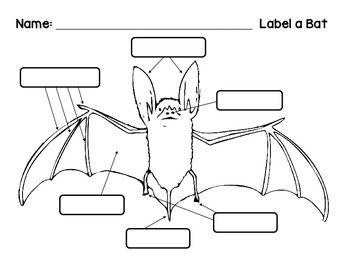 label bat diagram little brown bat diagram