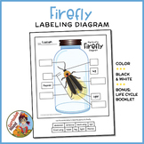 Firefly Diagram - Parts of an Insect Labeling + Life Cycle