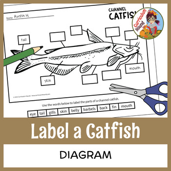 label a fish diagram - parts of a fish labeling - channel ... fish diagram for nursing