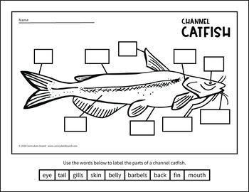simple fish diagram cat fish diagram label